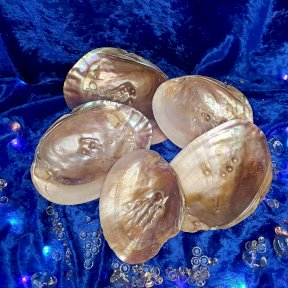 Natural Shell Smudge Dish SSH-01
