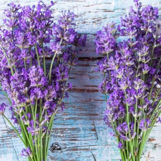 Classic English lavender bunches, essential oils, relaxations, sleep aid